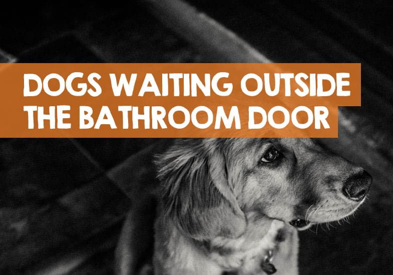 why does my dog wait outside the bathroom
