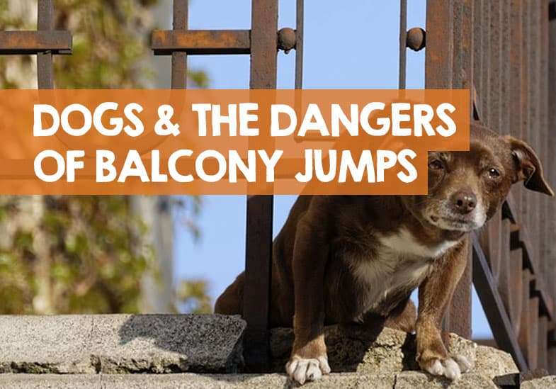 do dogs jump off balconies