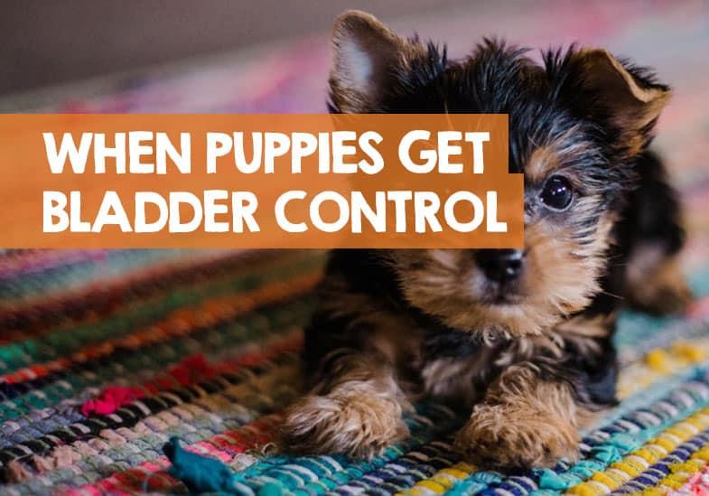 when do puppies develop bladder control