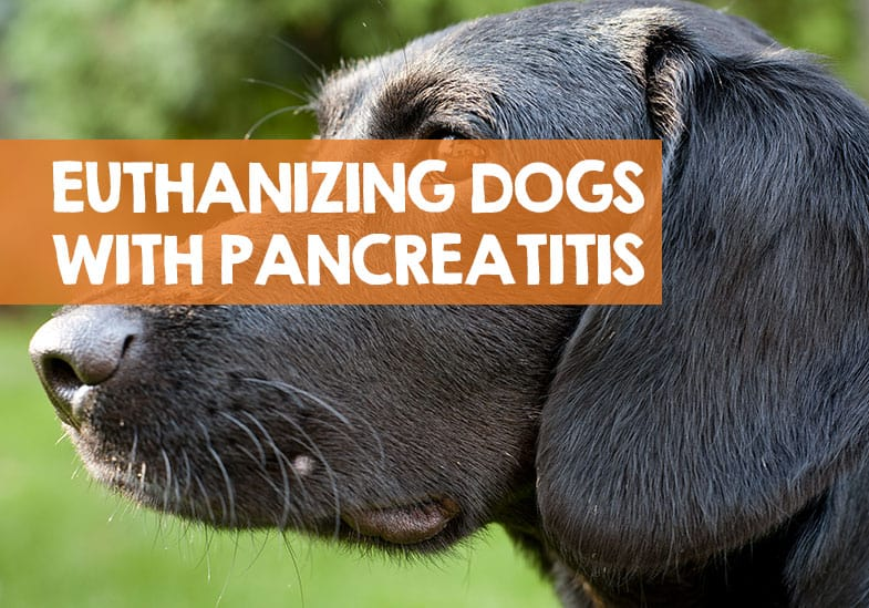 when to euthanise dog with pancreatitis