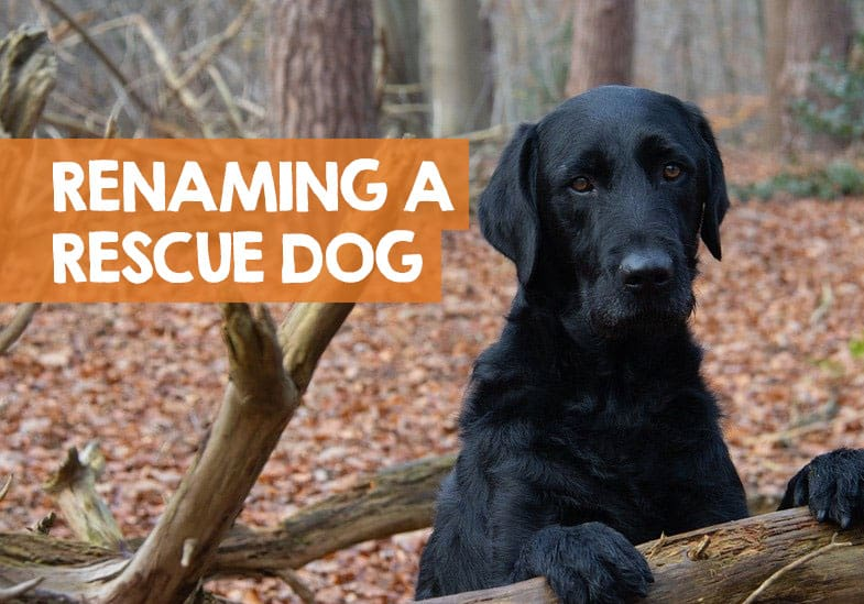 rename a rescue dog