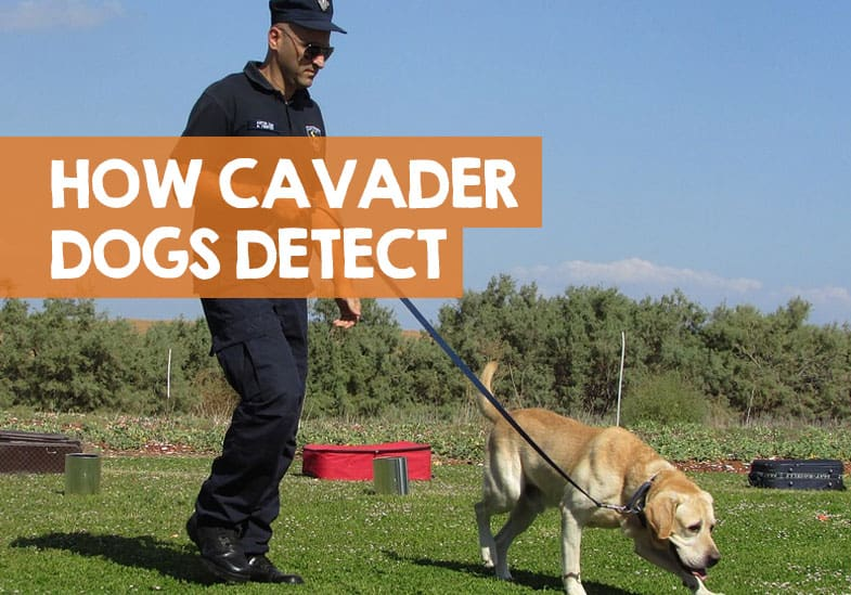 How Soon After Death Can a Cadaver Dog Detect