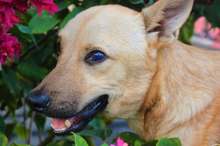 dog blindness symptoms