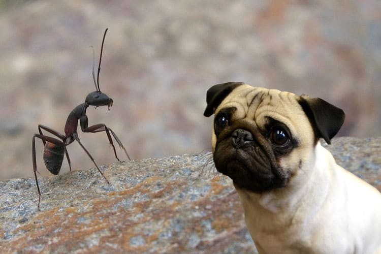 are ant traps poisonous to dogs