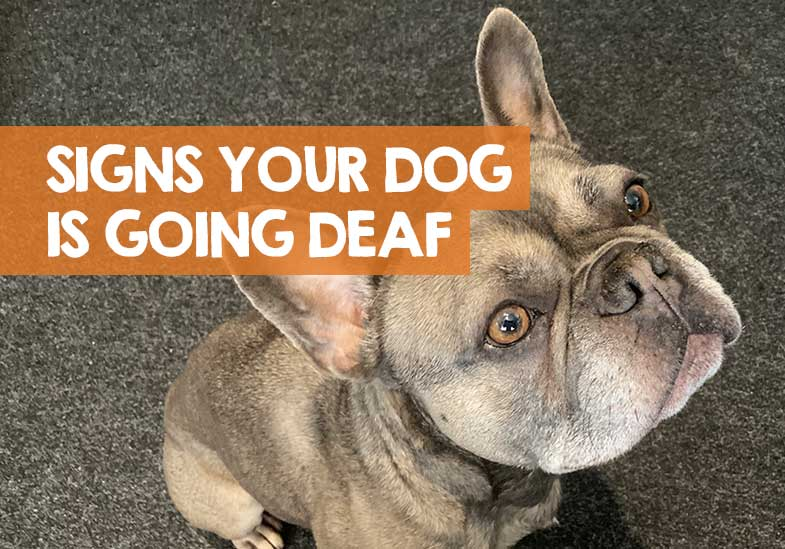 How to Tell Your Dog is Going Deaf