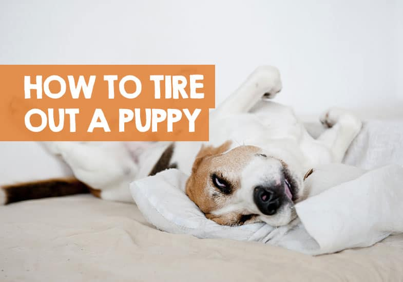 How to tire out a puppy before bed