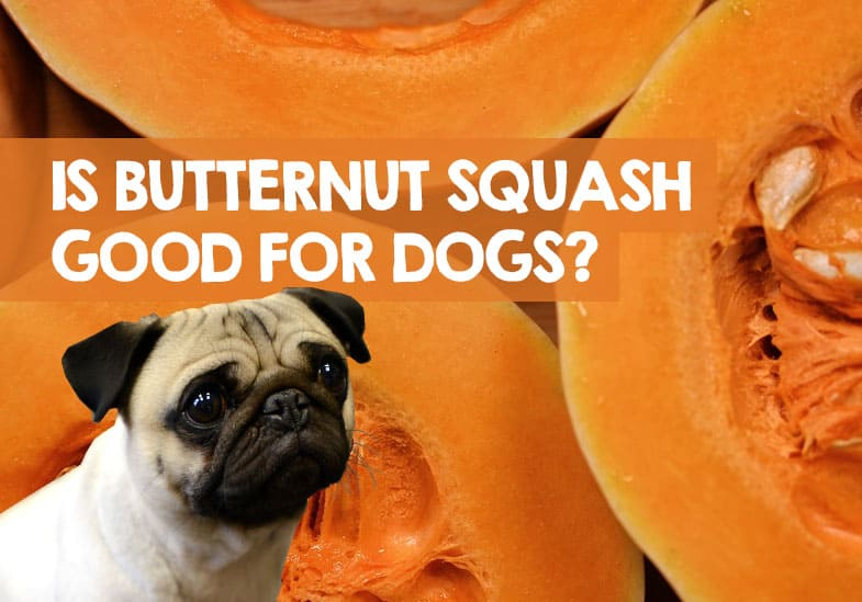 Is Butternut Squash Good for Dogs to Eat