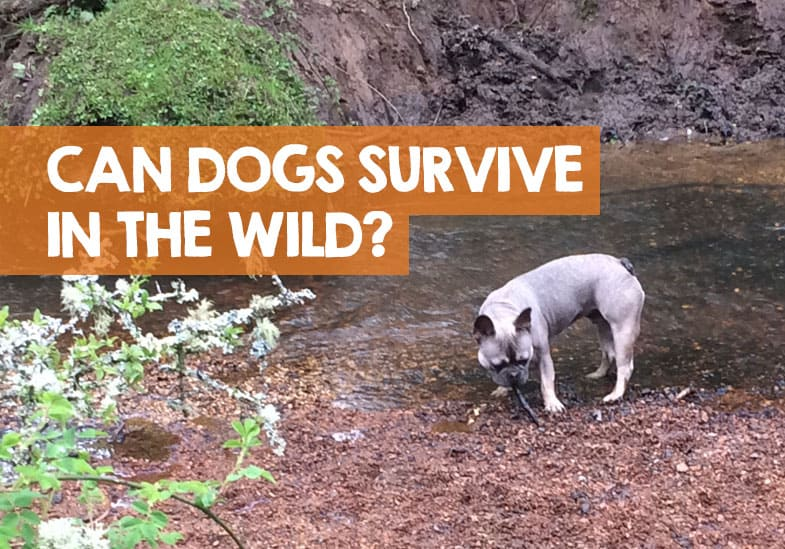 can dogs survive in the wild