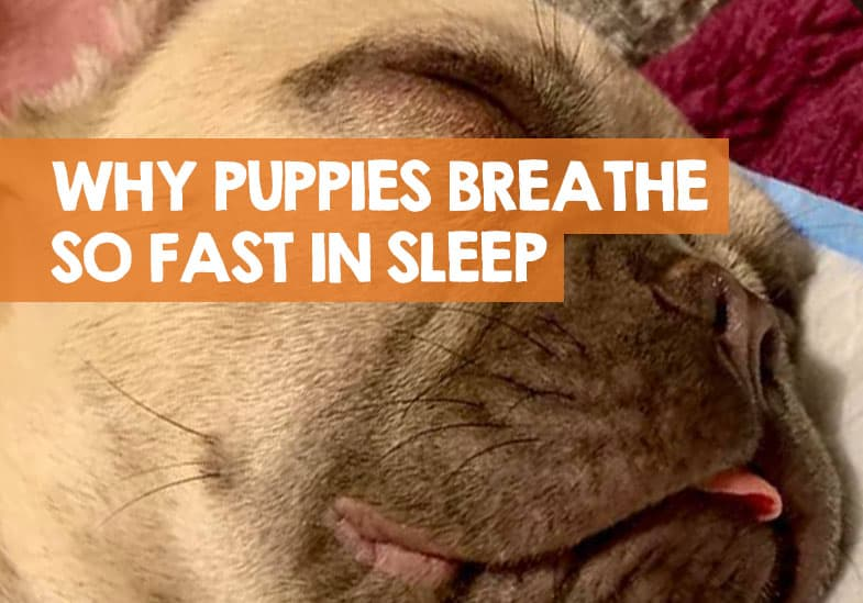 Why Do Puppies Breathe So Fast When They Sleep