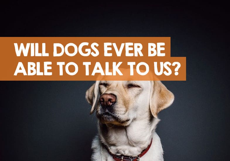 will dogs ever be able to talk