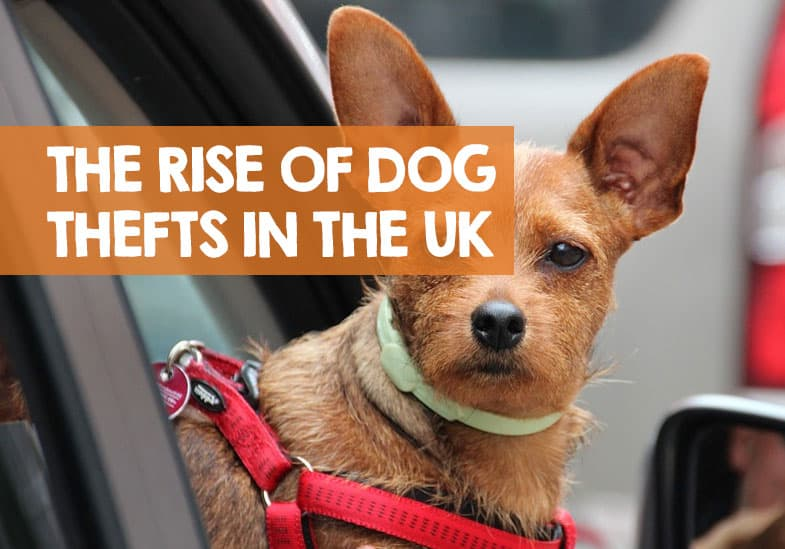 How Many Dogs Are Stolen in the UK