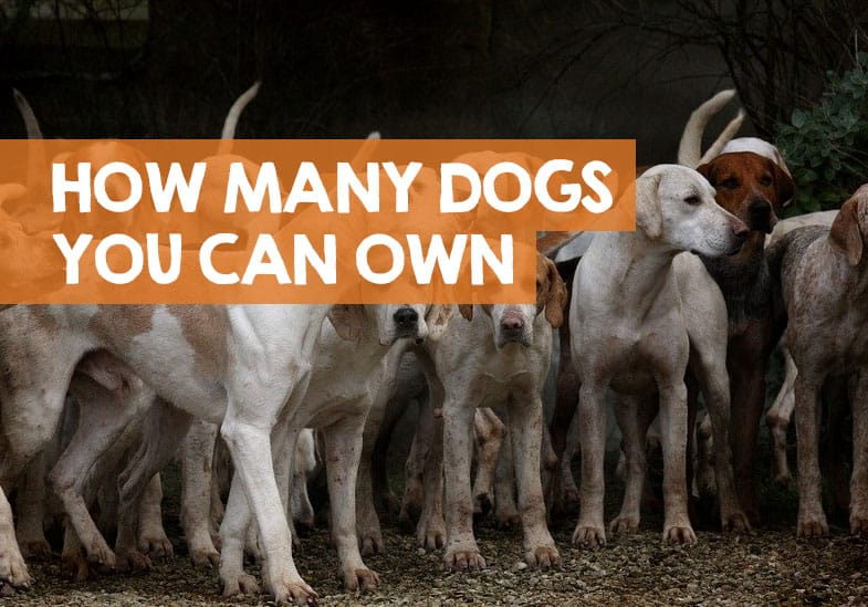 how many dogs can you own
