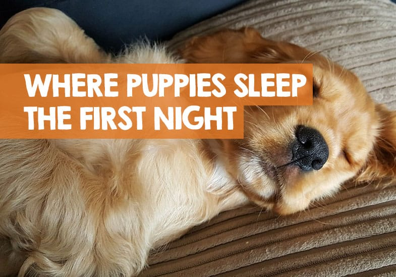 Where should a puppy sleep the first night