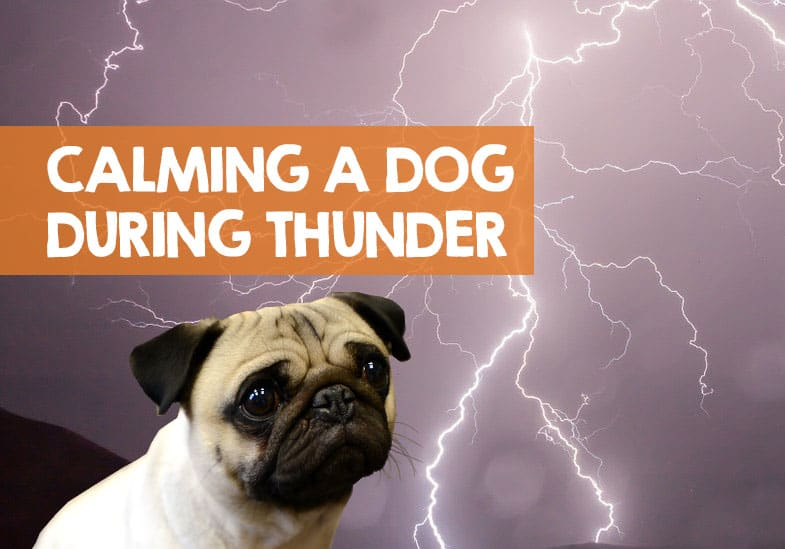 how to calm a dog during a thunderstorm