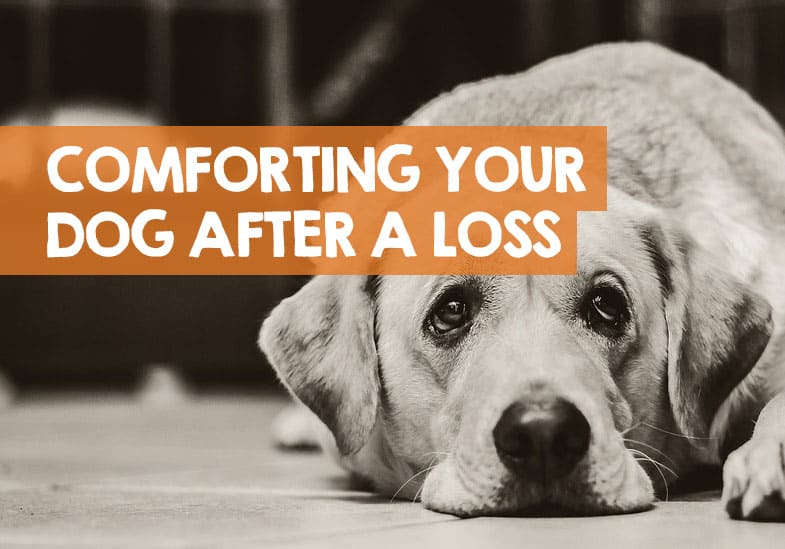 how to comfort a dog after losing her puppies