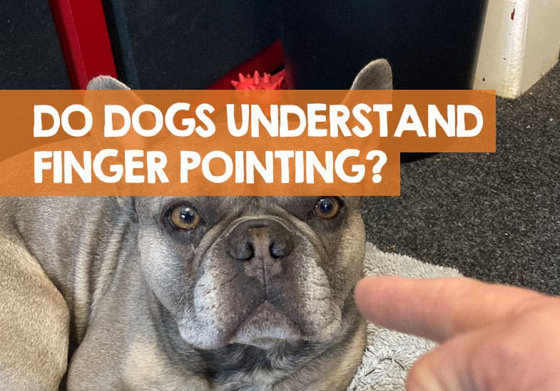 Do Dogs Understand when You Point at Them
