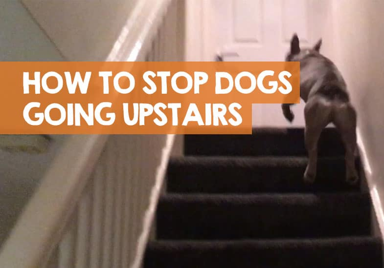how to stop a dog going upstairs