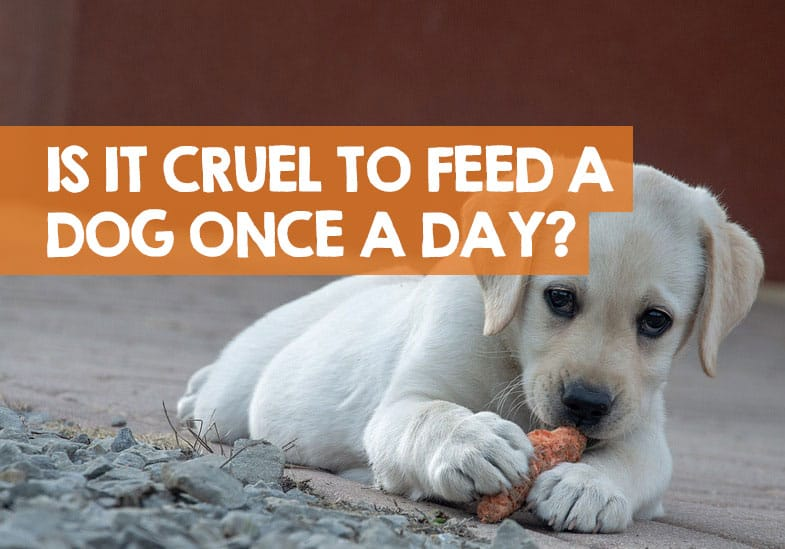 Is it Cruel to Feed a Dog Once a Day
