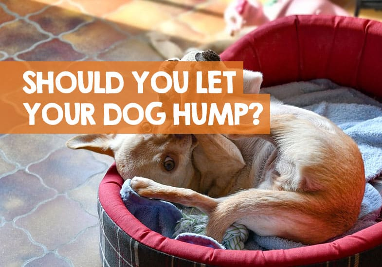 Should You Let Your Dog Hump